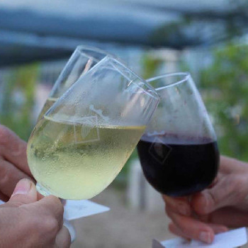 Journey through the Mediterranean to an exclusive organic winery.