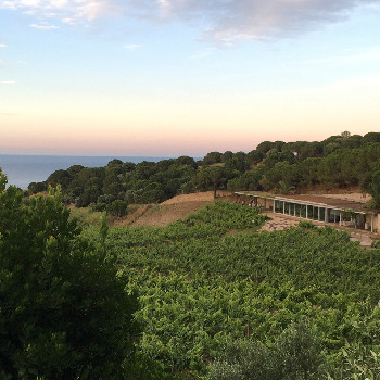 Sail to a wine tasting in this visit to an ecological wine cellar overlooking the sea!